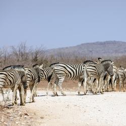 Namibië 96