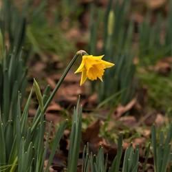 Het voorjaar komt er aan