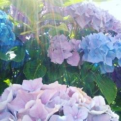 Bloemen met zonnestraal