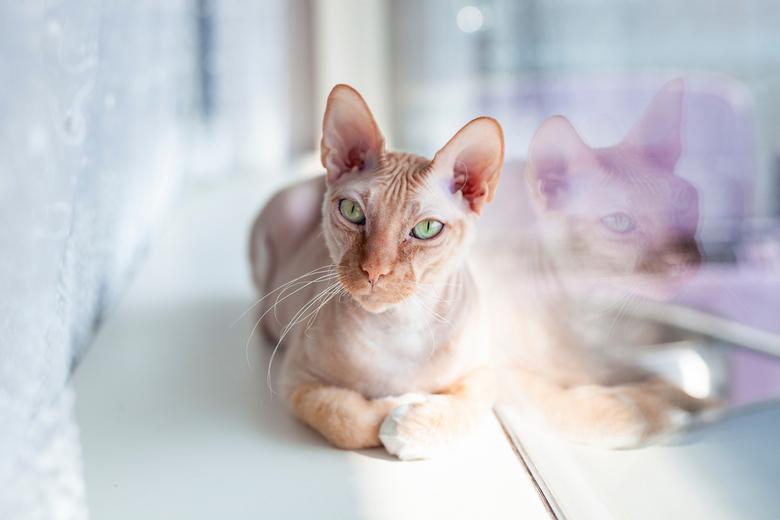 Cat love - Als het model nog niet klaar is om te shooten en tijdens het wachten een ander model voor je gaat poseren. <br /> Even een paar kiekjes ma