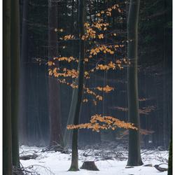 Laatste beetje kleur in het bos