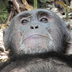 sommigen rennen zich het apenzuur en sommigen niet....uganda