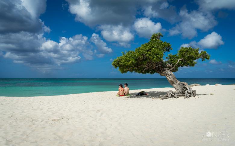 Divi tree - De bekende divi boom in Aruba. Een prachtig plekje om te genieten van al het moois om je heen