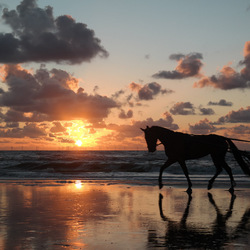 Onverwachtse Verrassing op het Egmondse strand