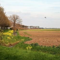 Landschap met bloeiende berm