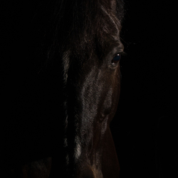Een ander soort paardenfoto