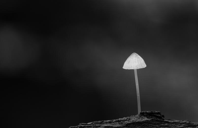 Glow in de dark