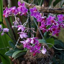 Orchideen hoeve