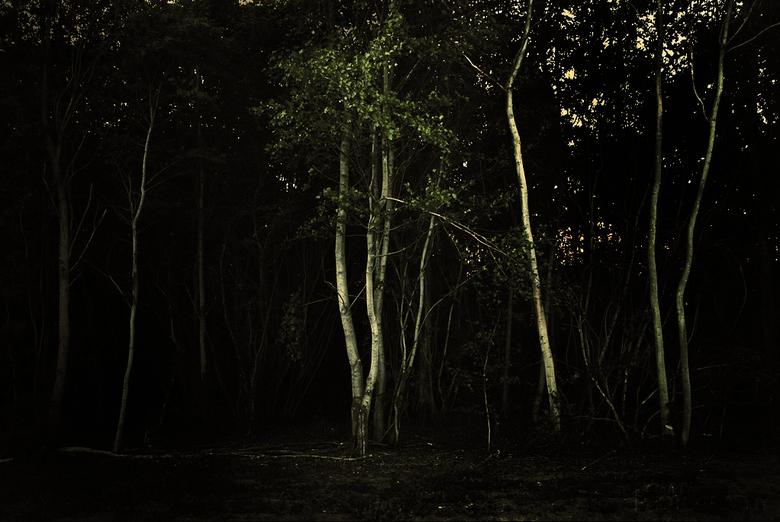 Autumn evening - Deze foto is gemaakt in een bos, het heeft een herfst achtige sfeer en ik vind de kleuren mooi uitkomen.