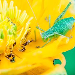 geel en groen 4969