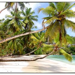 palmbeach The Seychelles