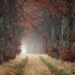 Herfstlaan met bomen in de mist