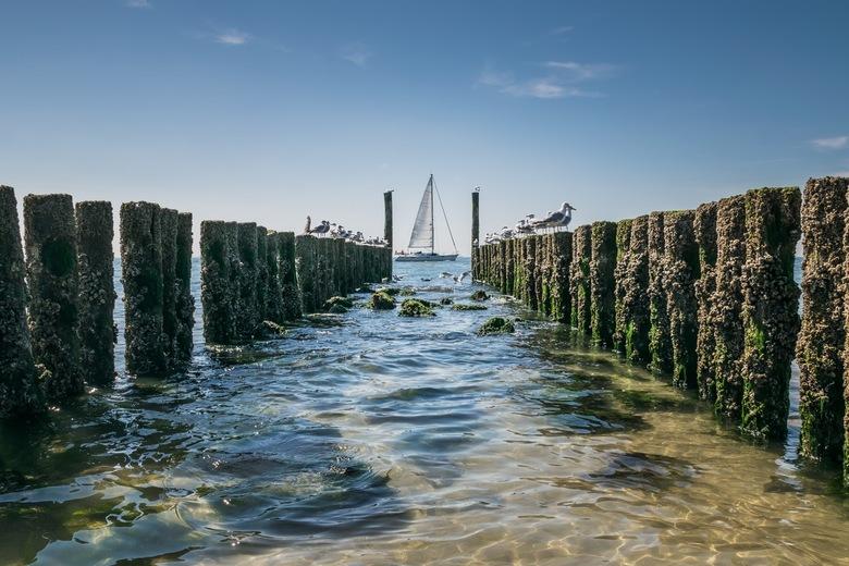 Zeeuwse kust - Eens per jaar moet ik altijd even naar Zeeland. De lange rijen palen op het strand en de grote vrachtschepen die heel dichtbij de kust