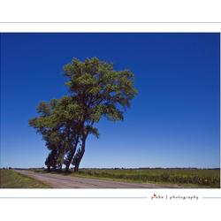 Hangende bomen