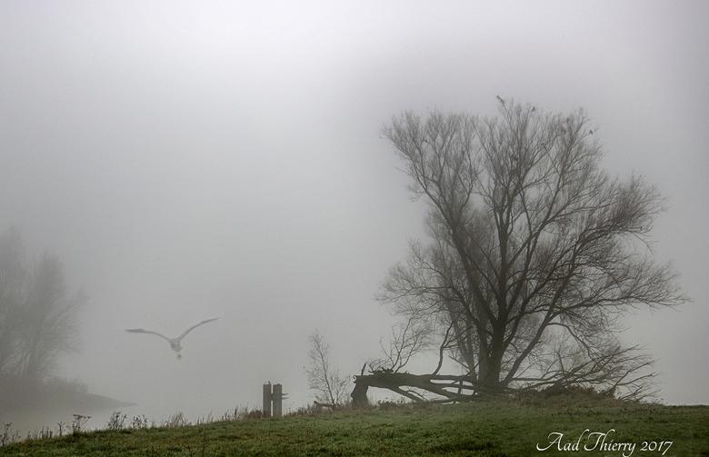 Mist aan de Rivier