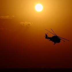 LYNX at sunset