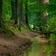 bosbeek