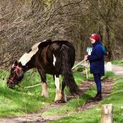Paard uitlaten