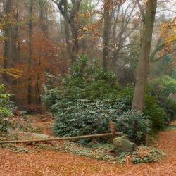 Herfst in de Graven Allee 4