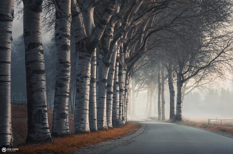 Brittle birches bend - Berkenbomen aan een weg in Tilburg.