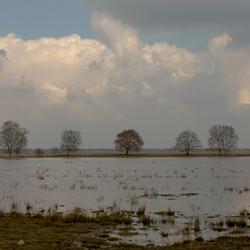 Nat landschap