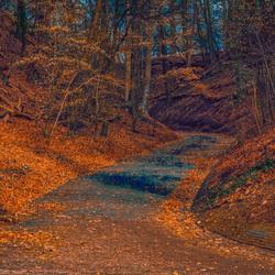 Holleweg-herfst