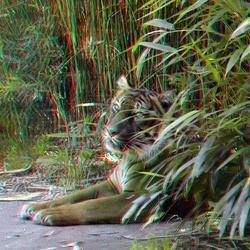 Tijger Zoo Blijjdorp Rotterdam 3D