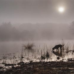 Misty Aprilmorning