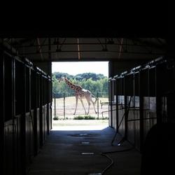 Behind the scenes bij safaripark