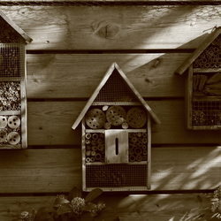 Oude huisjes, nieuwe bewoners