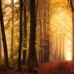 Autumn Warmth.