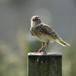 vogels in Blijdorp