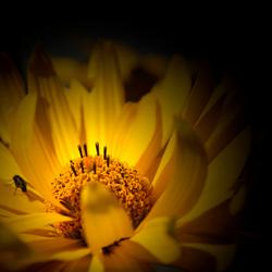 bloem uit eigen tuin
