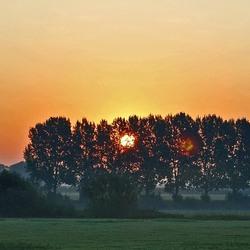 Zie zon schijnt door de bomen