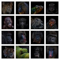 Collage Dark animal portraits