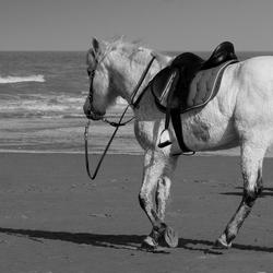 paard alleen op stap op het strand