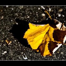 Herfst, herfst wat heb je te koop.....
