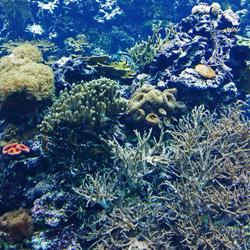 Het koraalrif