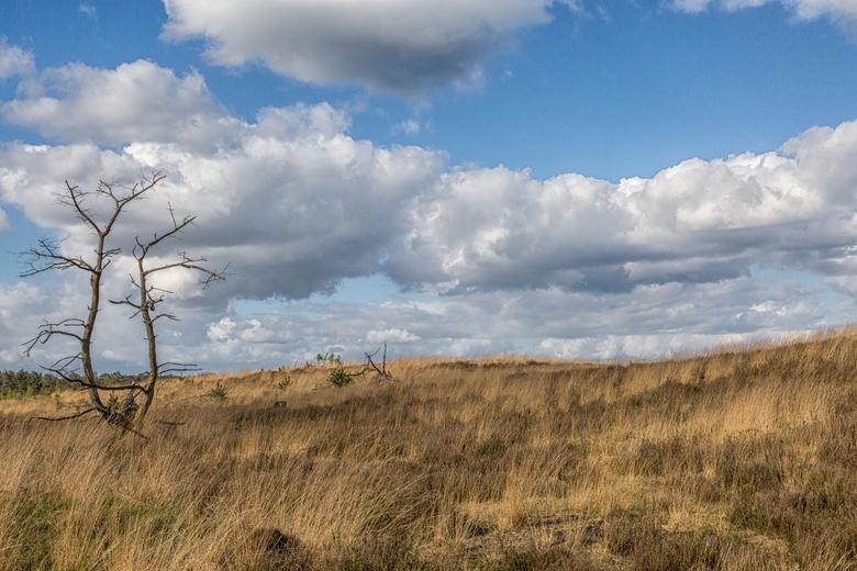 Kalmthoutse Heide - Met dank aan de boom en de wolken.