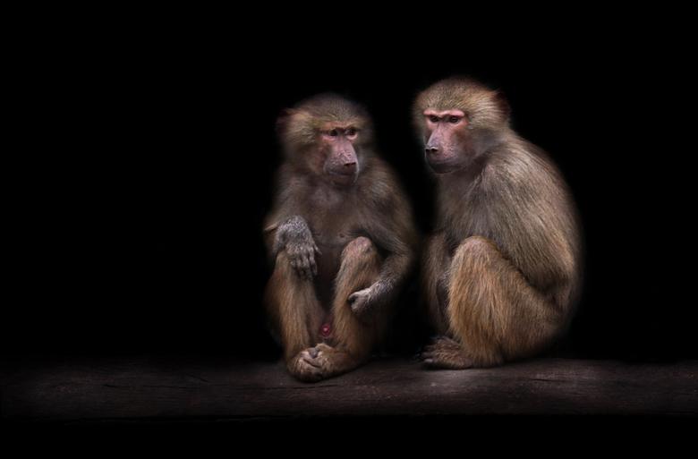 Two Brothers! - Altijd maar bezig en elkaar aan het opjutten deze beesten, maar ze kunnen ook stil zitten...blijkbaar.<br /> <br /> Thanks voor de r