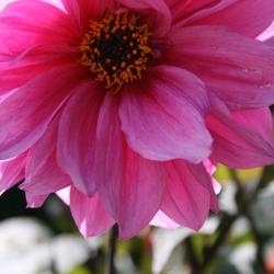 wat een prachtige bloem