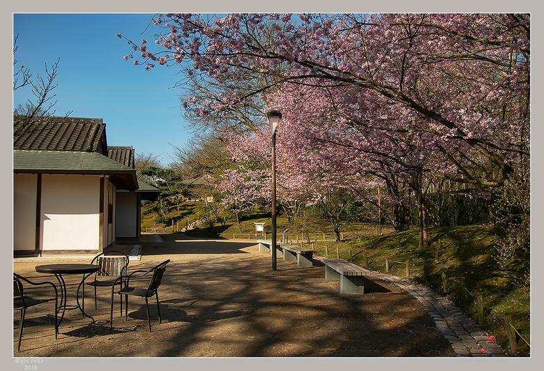Lente in de Japanse tuin 13