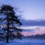Zonsondergang op winterse Veluwe