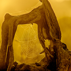 Web In Wood