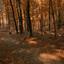 Herfst- Dunoplateau -Italiaanseweg