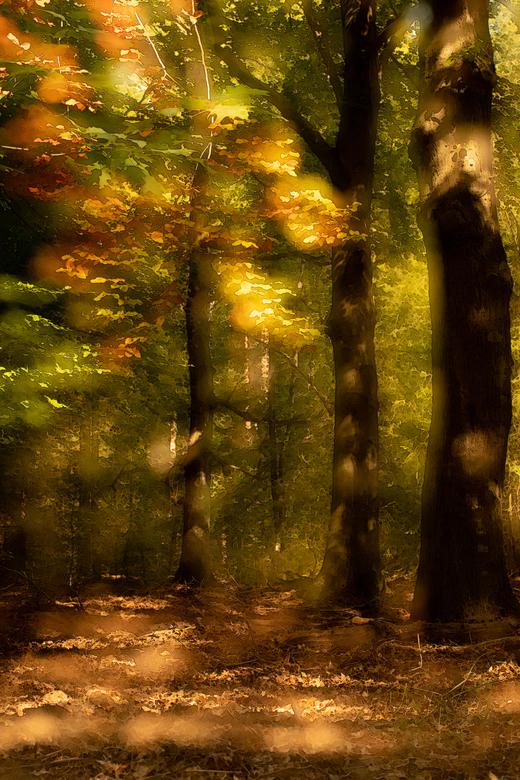 herfstpainting - 2 foto's in de camera gemaakt; 1 scherp en 1 out of focus, daarna in PS bewerkt