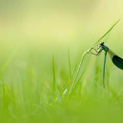 verscholen in het gras..