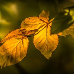 Herfst in de Steeg (3)