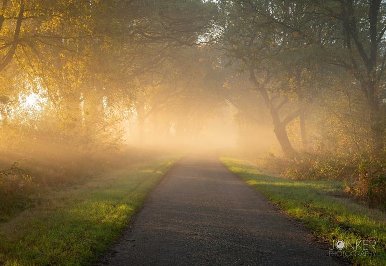 Autumn light - Een prachtige zonsopkomst met veel mist. De zon schijnt vanaf de zijkant prachtig het bos in. Het lijkt wel een sprookje