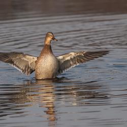 Dancing on water